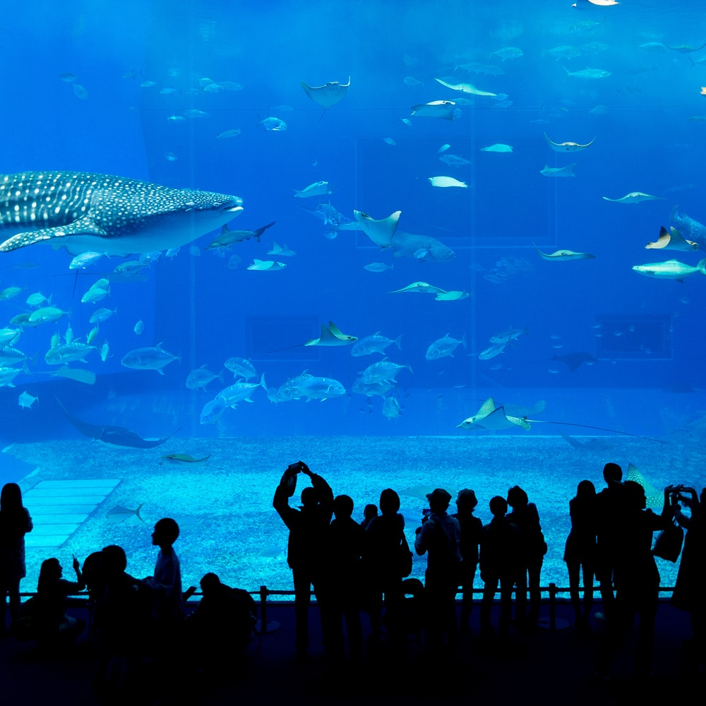 Dubai Aquarium & Underwater Zoo: Skip the line cover