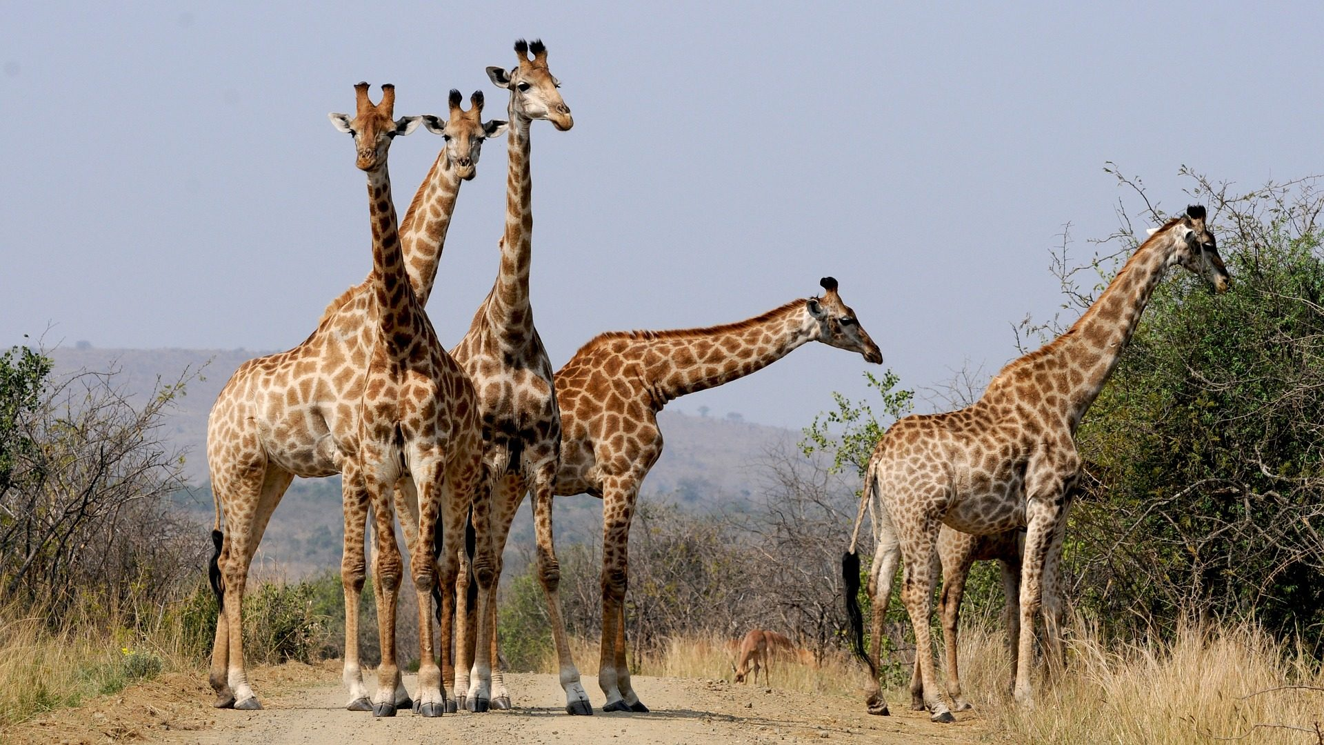 grahamstown-hotels-zuid-afrika