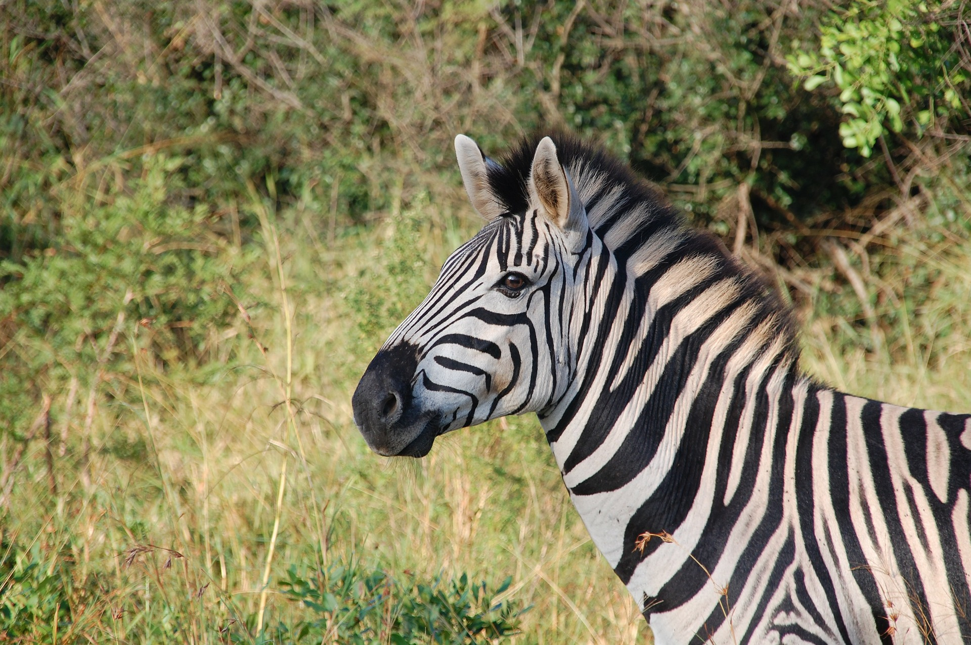 Marloth Park Zuid-Afrika