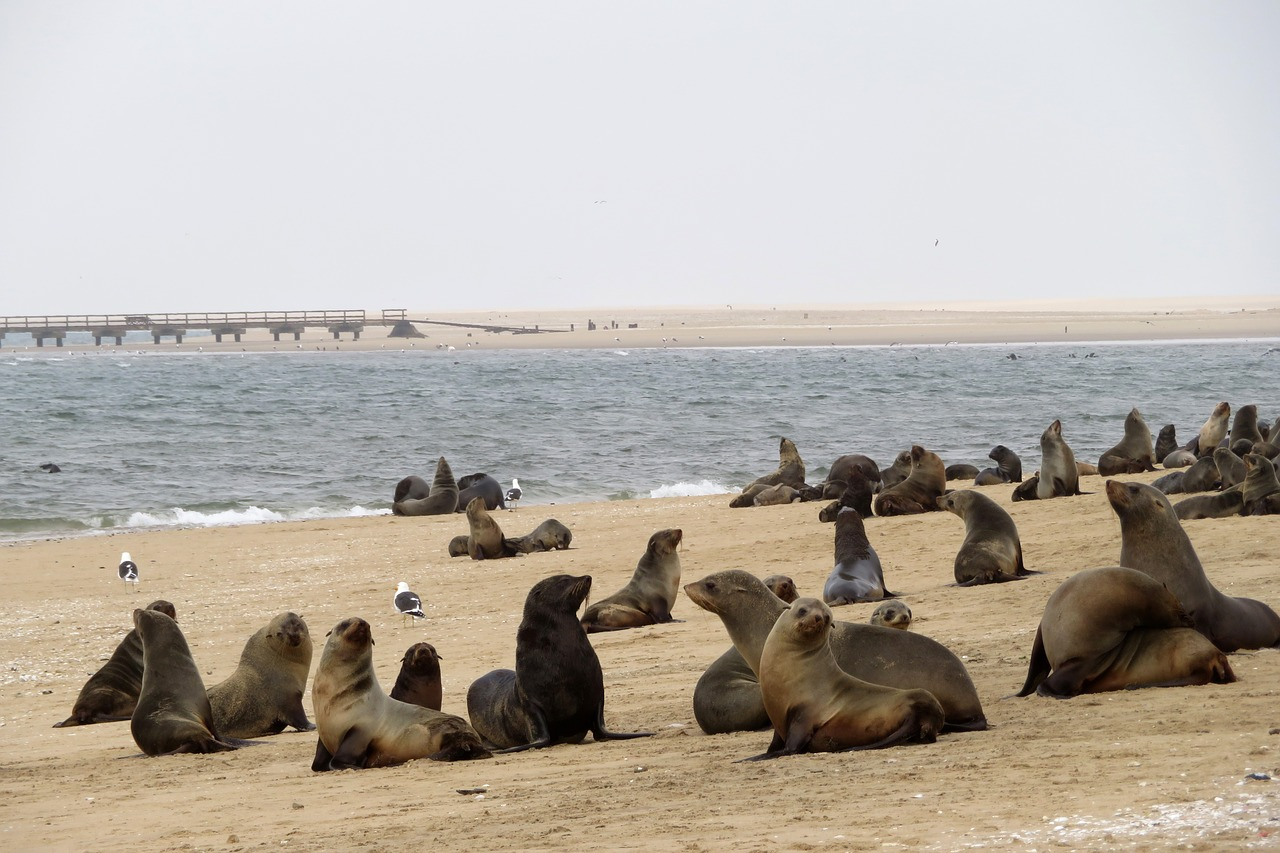 Swakopmund Namibië