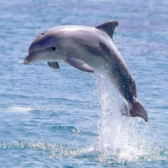 oman-excursie-dolfijnen-spotten