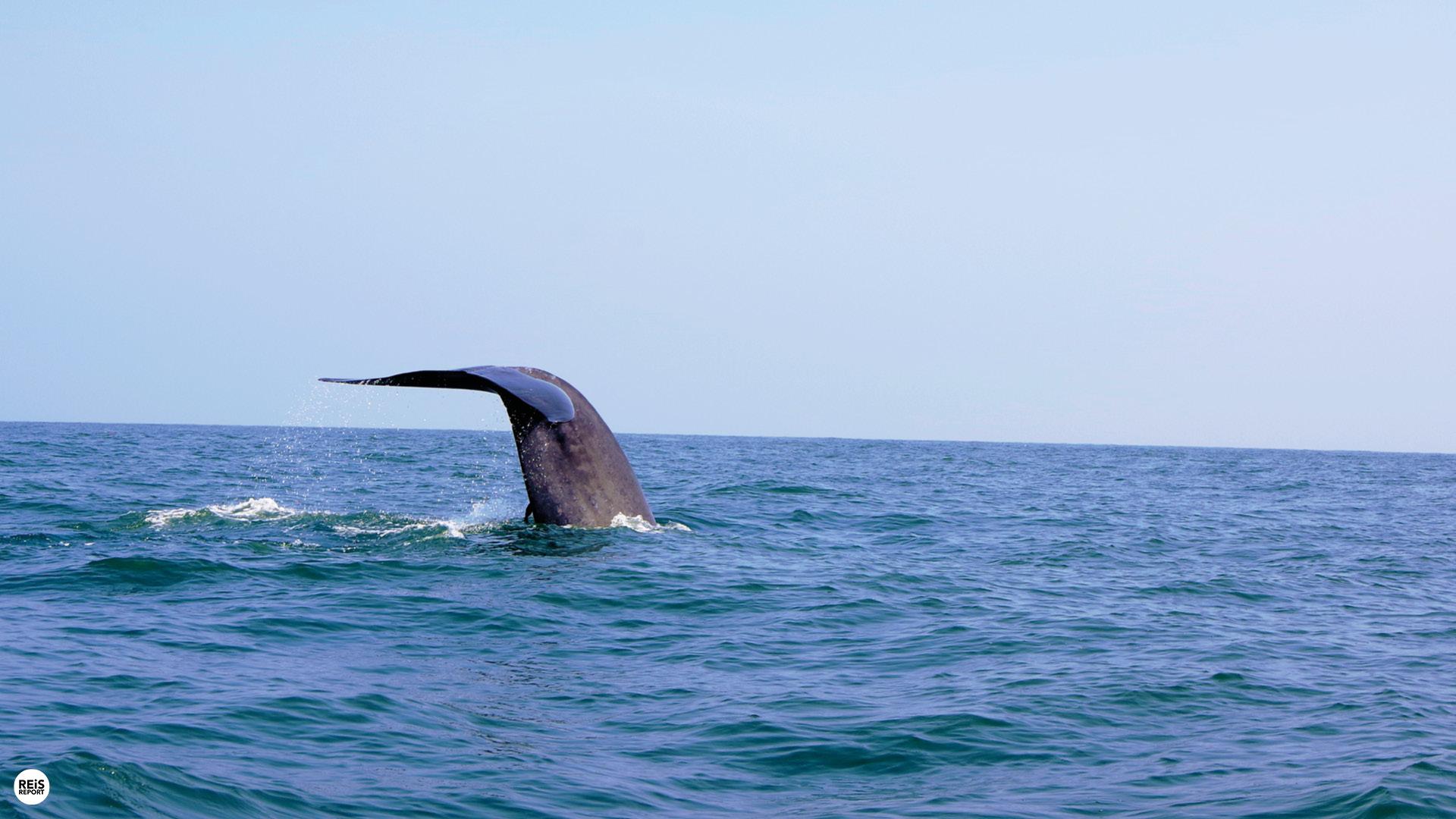 Walvissen spotten (Trincomalee) cover