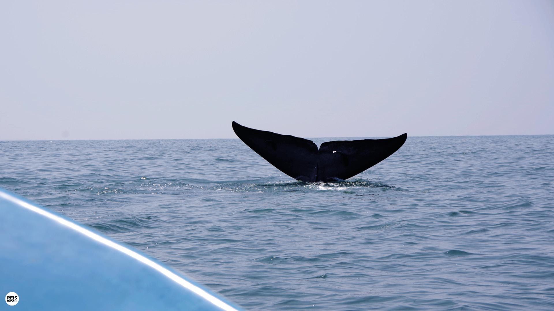 sri lanka walvissen spotten mirissa