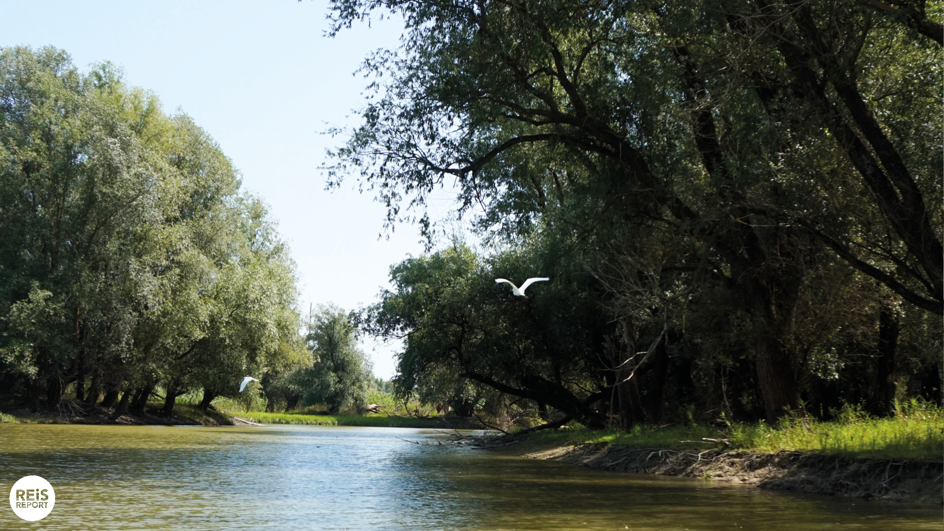 Kopački Rit kroatie natuurpark