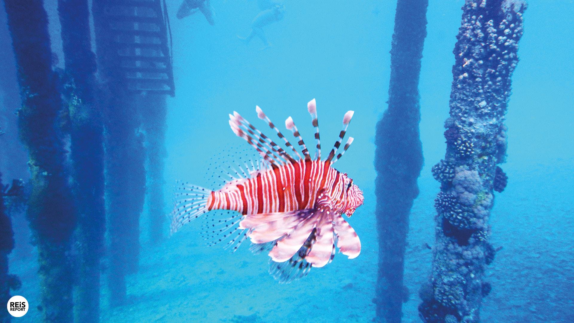 aqaba jordanie duiken snorkelen