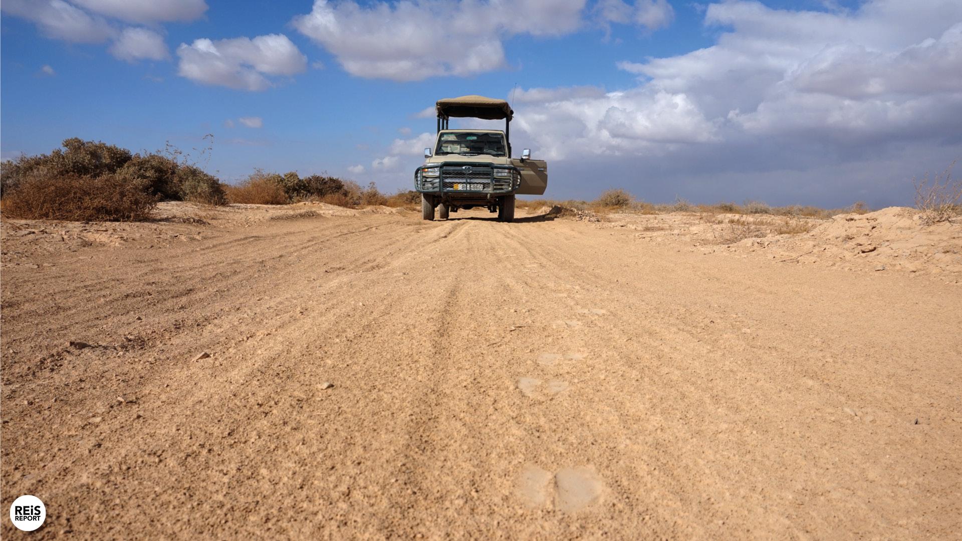 azraq wetland reserve jordanie