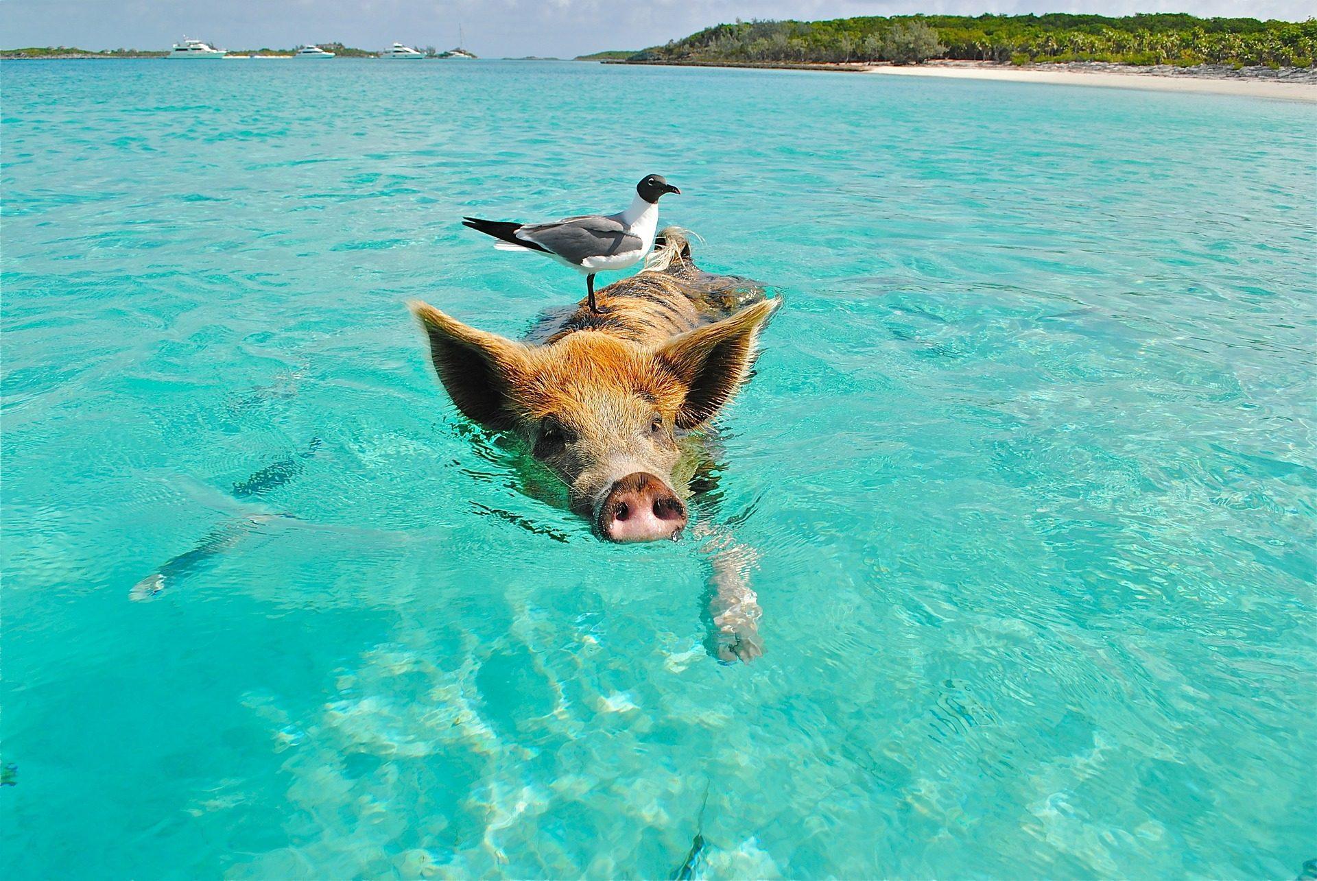 rondreis-bahamas