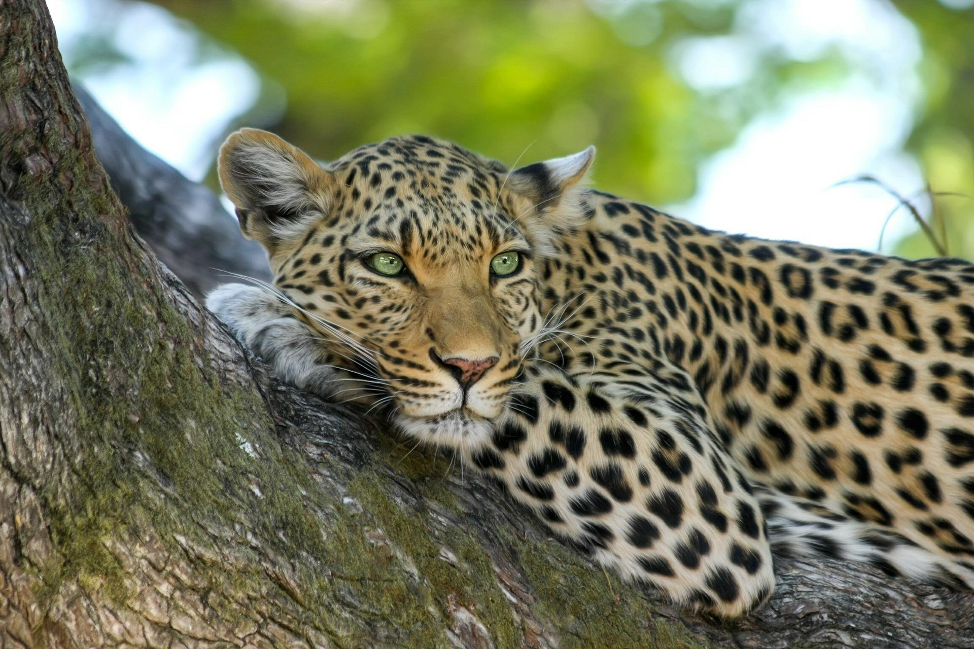 rondreis-botswana