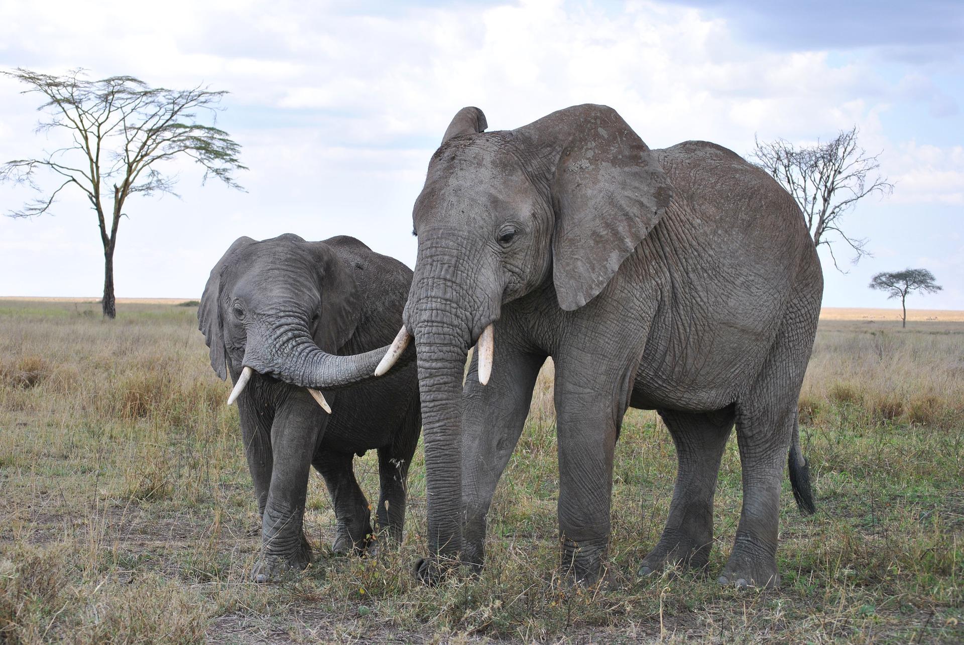 rondreis-tanzania