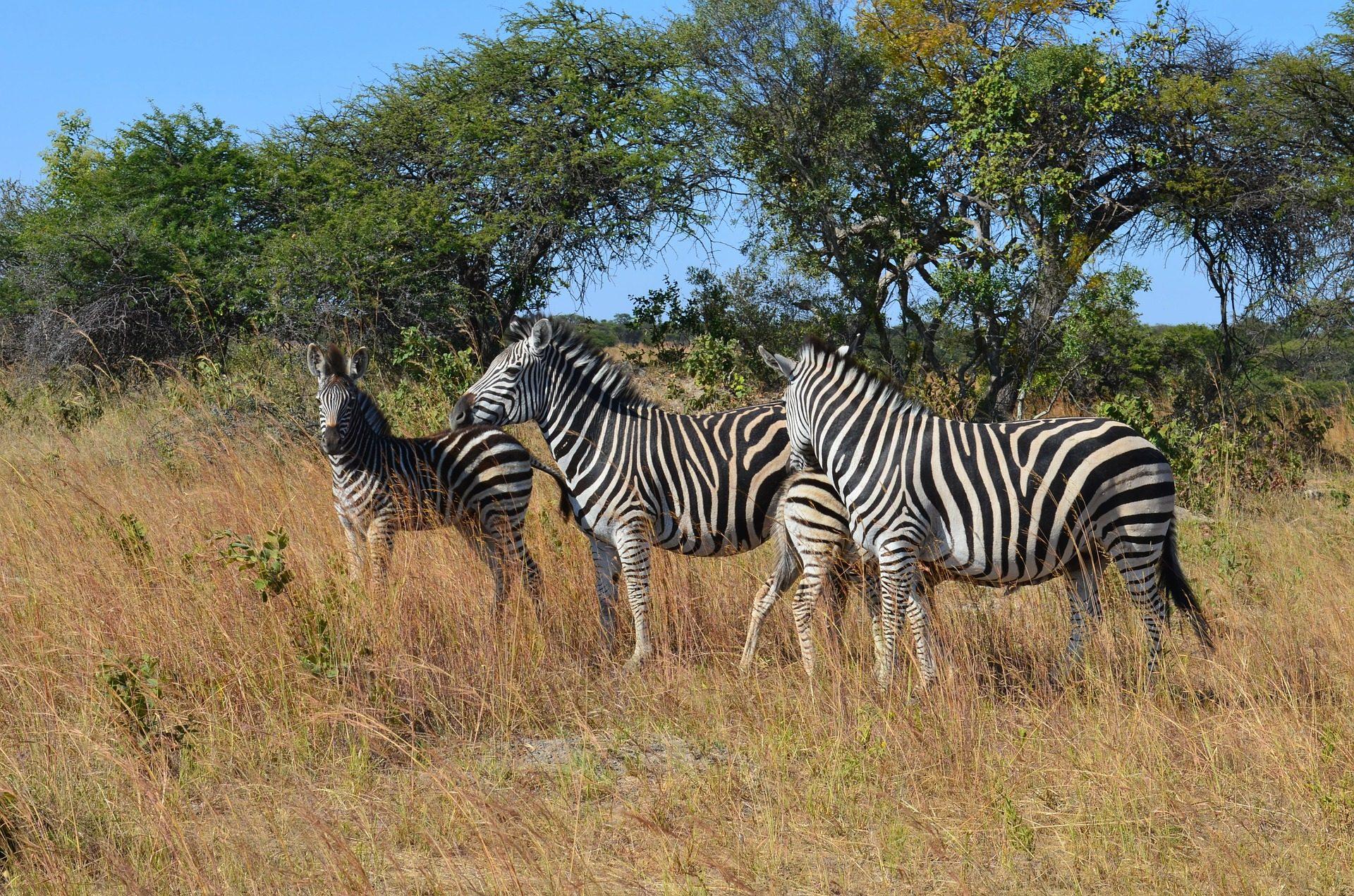rondreis-zimbabwe