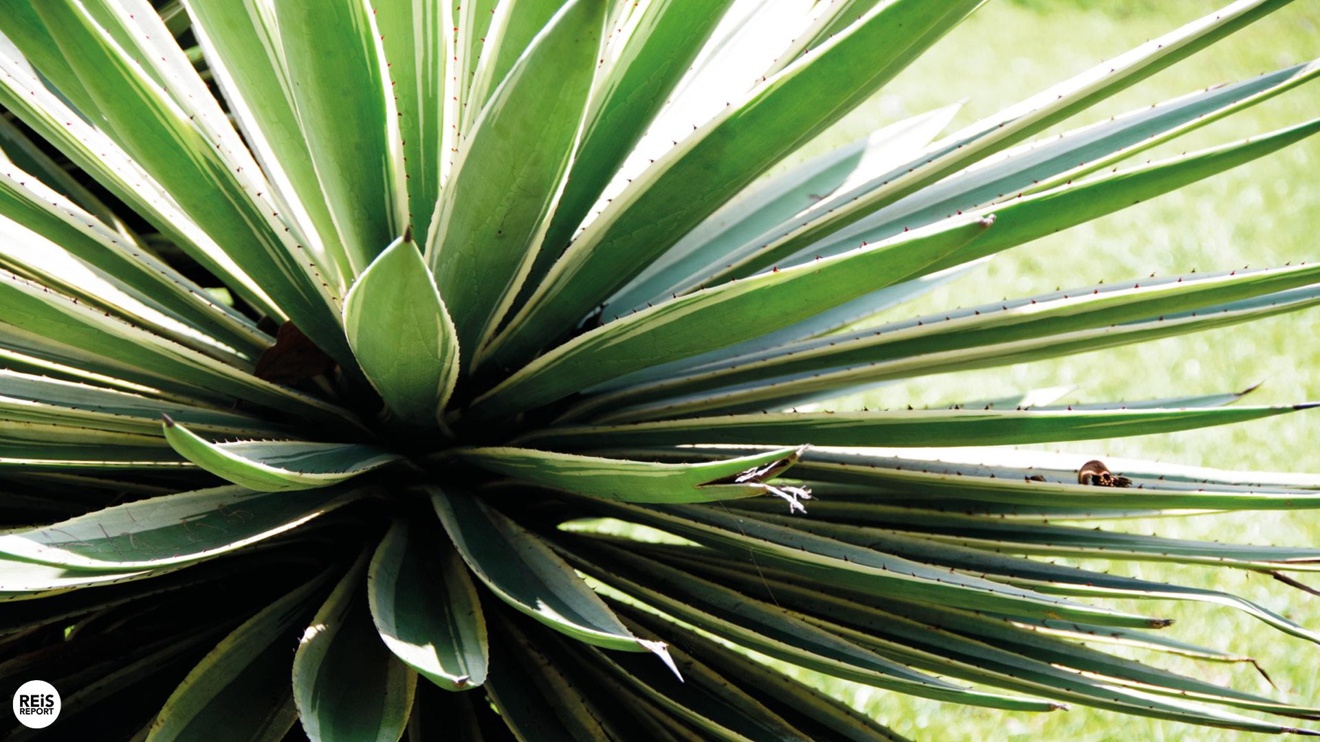 kandy botanische tuin
