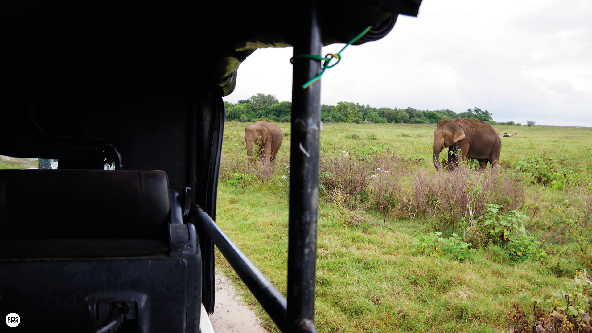 kaudulla nationaal park jeep safari sri lanka