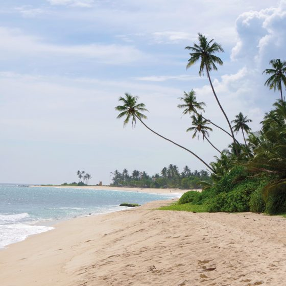 Sri Lanka reiswinkel