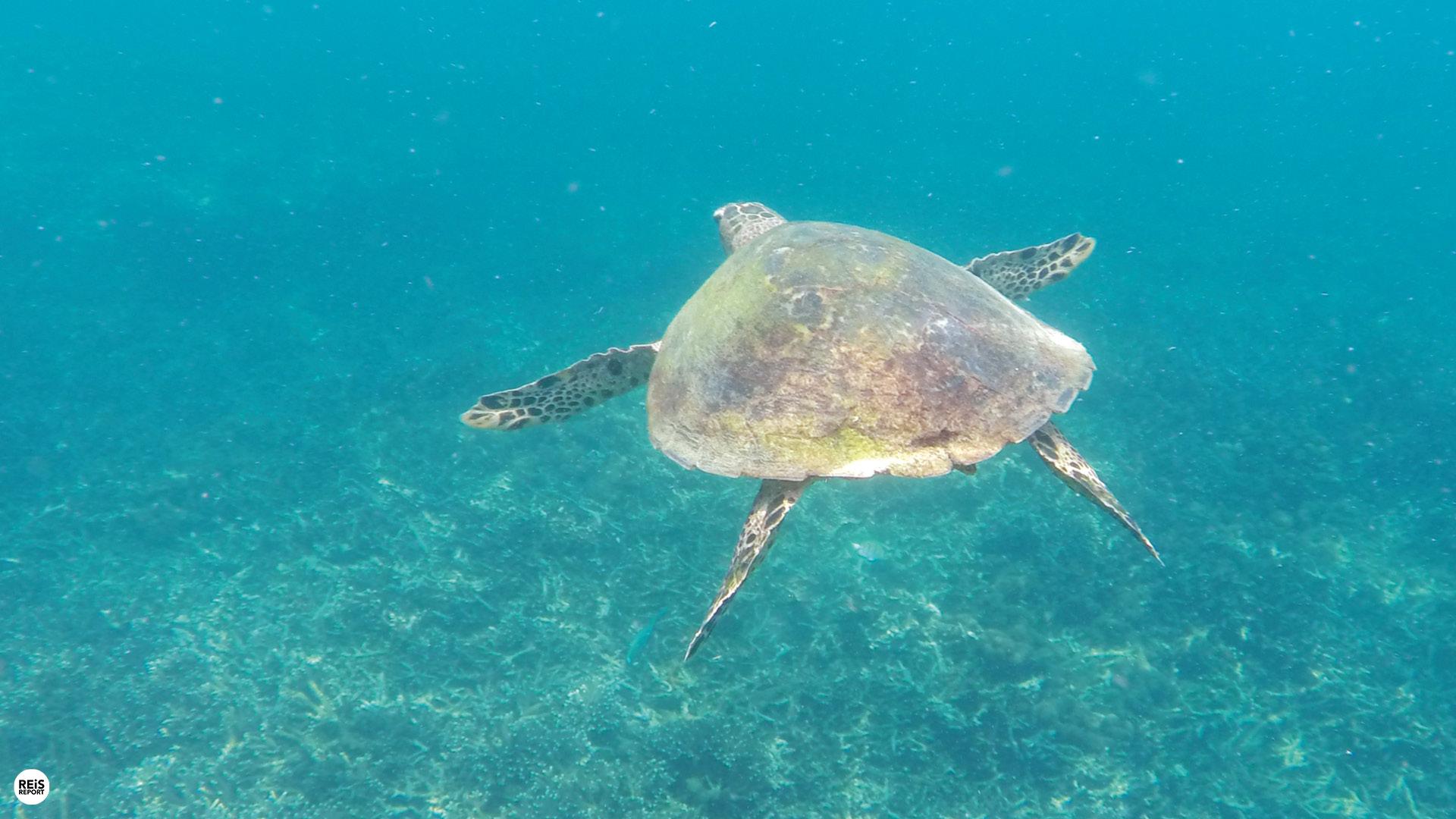 trincomalee snorkelen