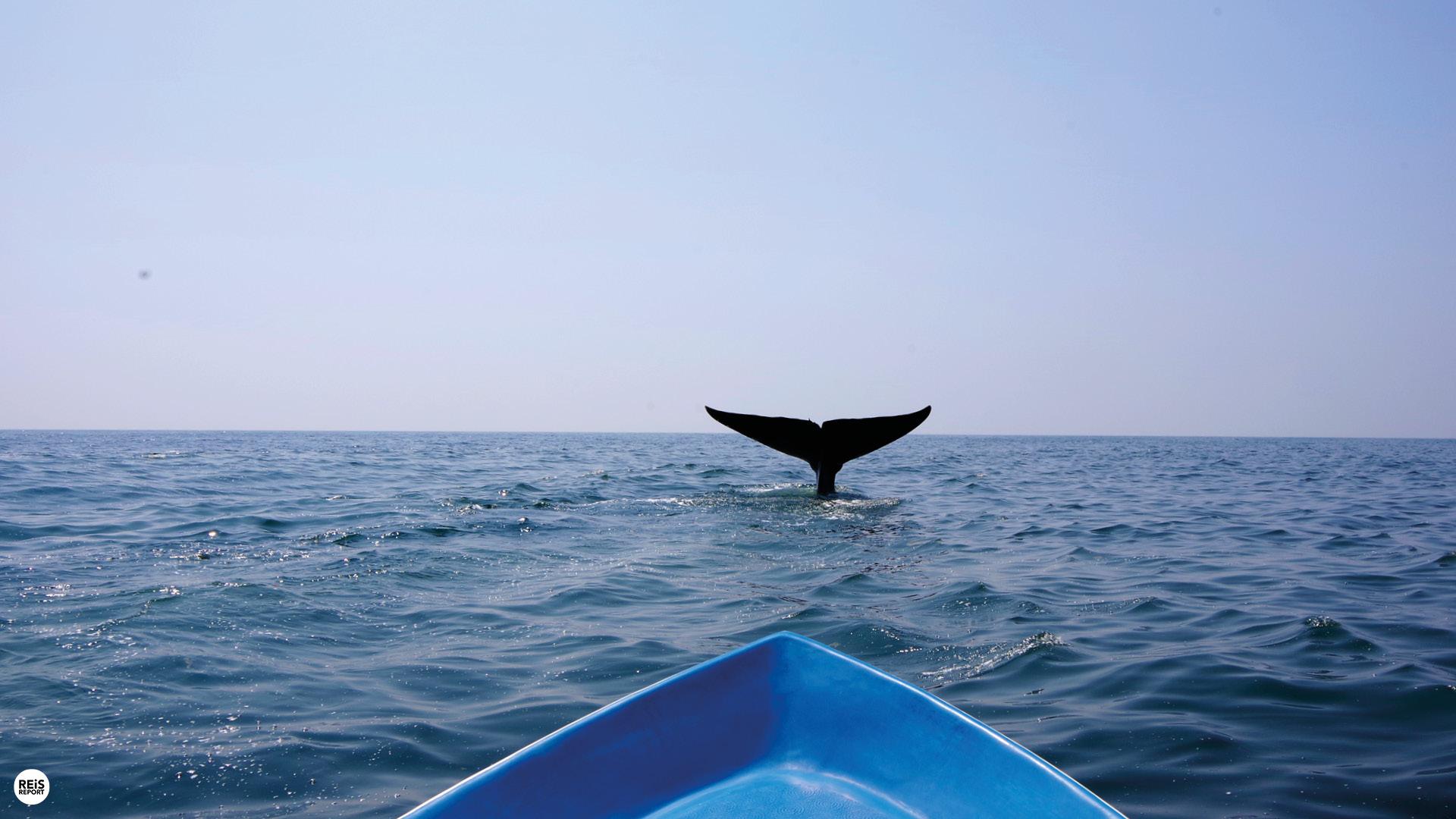 walvissen spotten trincomalee
