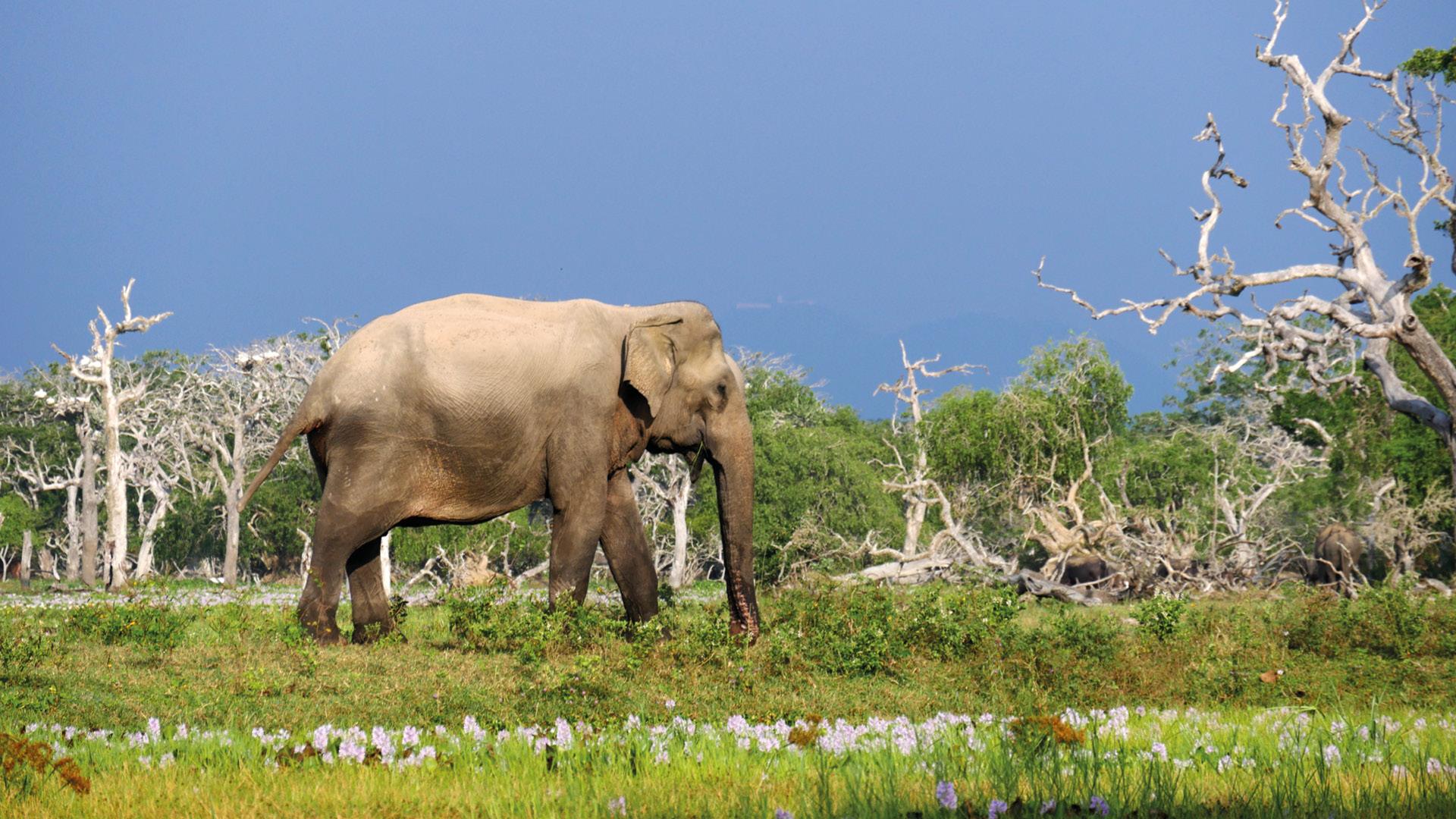 yala nationaal park sri lanka