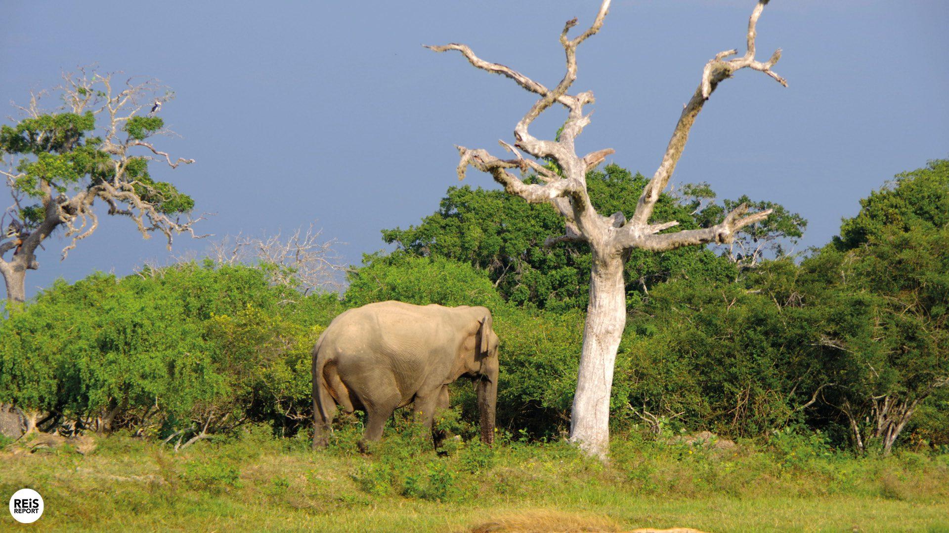 yala national park sri lanka olifanten