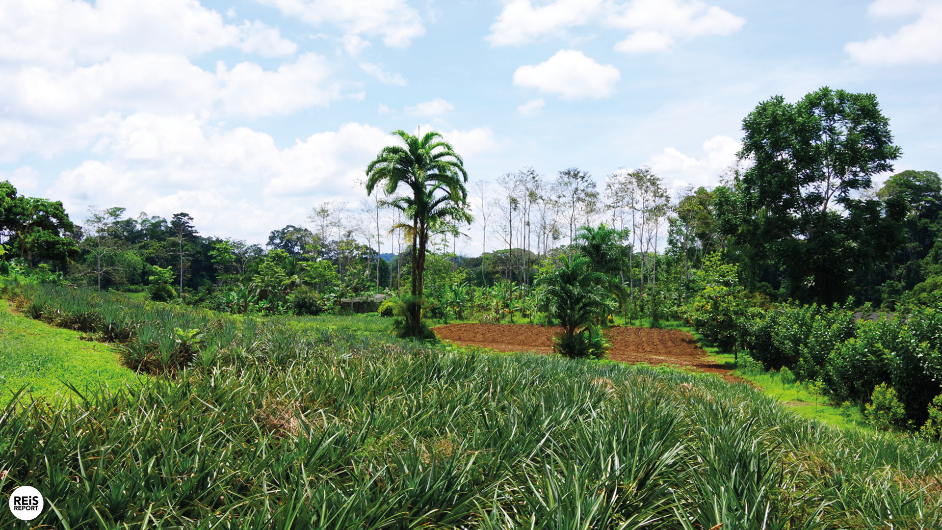 excursie costa rica ananasboer