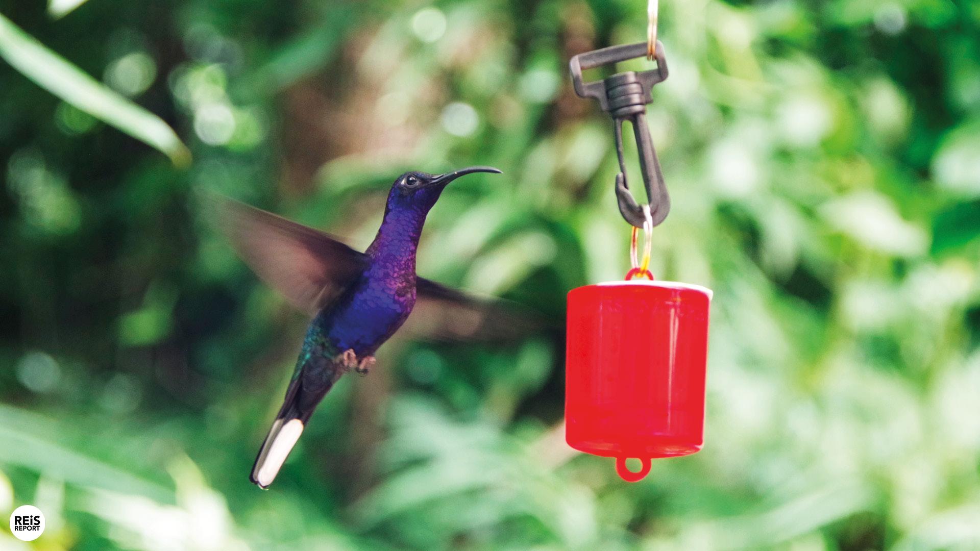 monteverde kolibrietuin