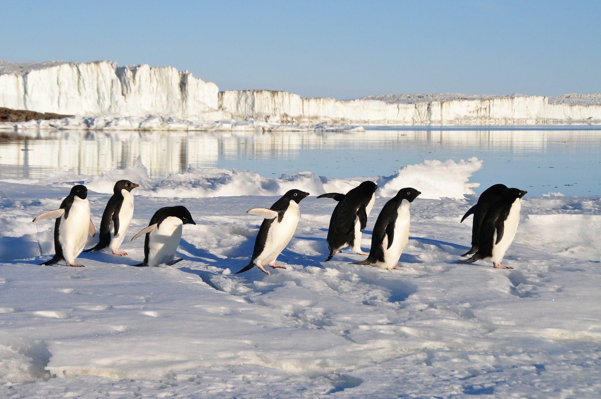 antarctica-rondreis