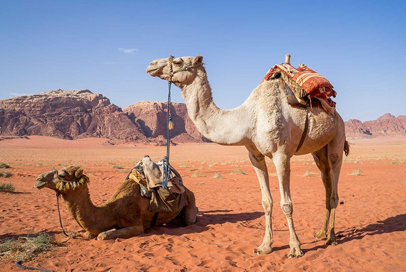 jordanie-rondreizen-vergelijken