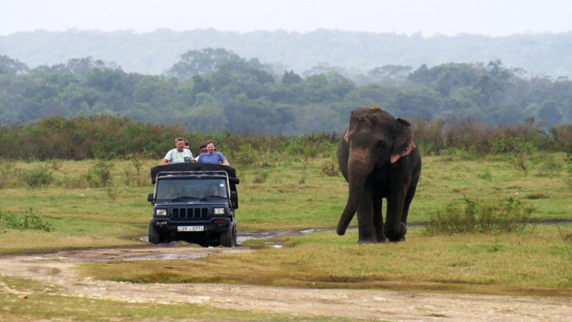 Olifanten spotten in Kaudulla National Park, Sri Lanka