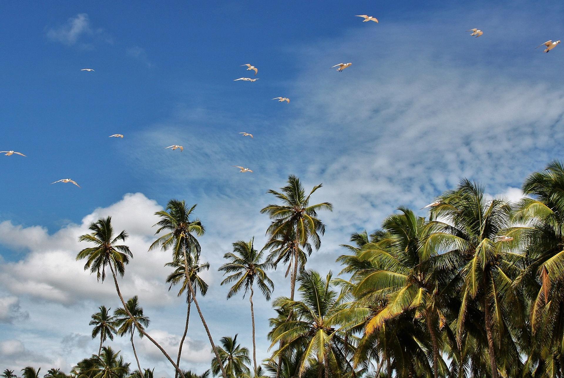 srilanka-rondreizen