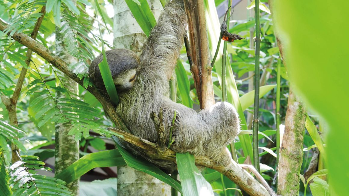 Tortuguero nationaal park, Costa Rica