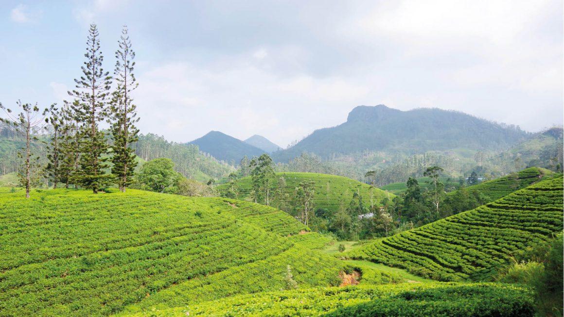 Treinreis door theevelden, Sri Lanka