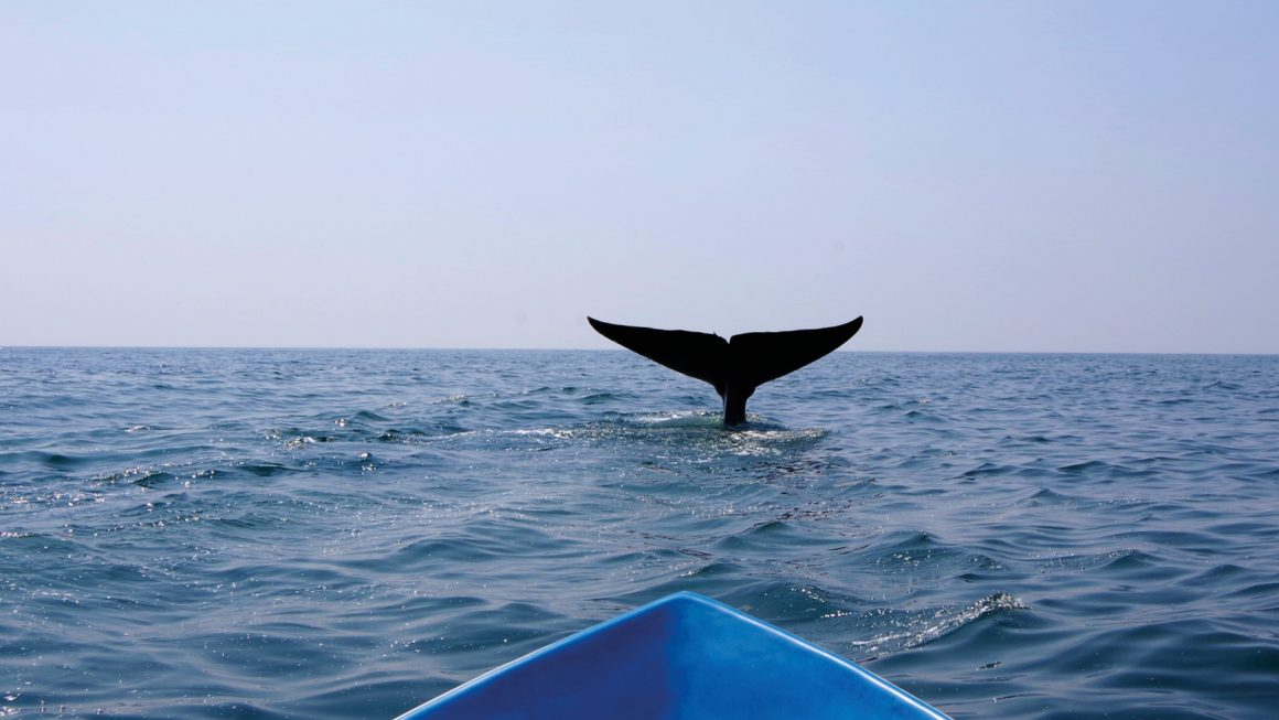 Walvissen spotten, Sri Lanka