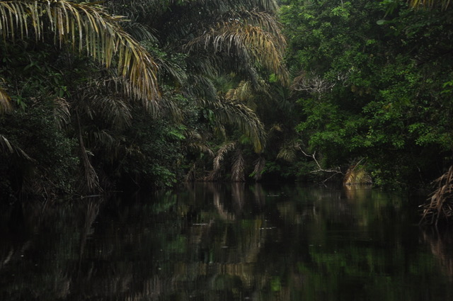 mangrove richting corcovado