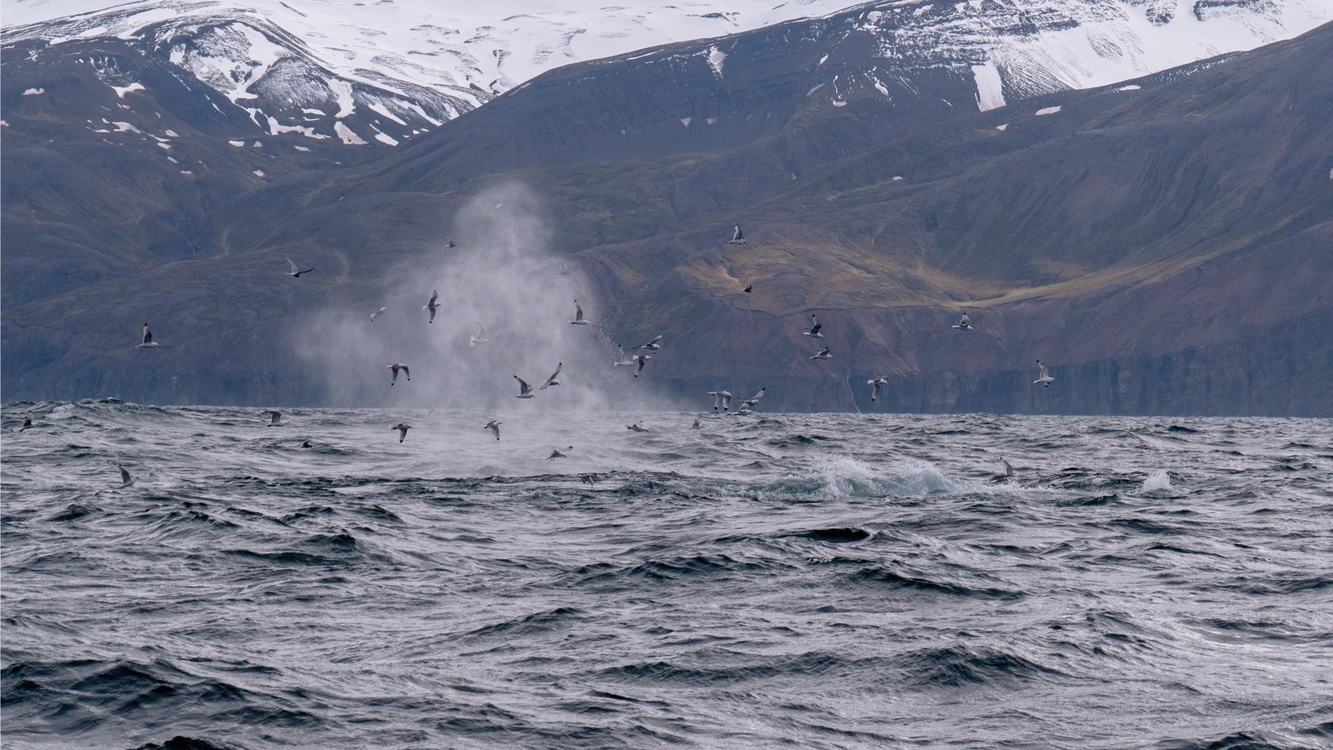 husavik-ijsland-bezienswaardigheden