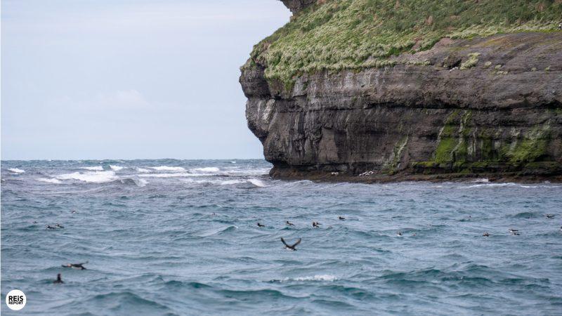 husavik-ijsland-walvissen