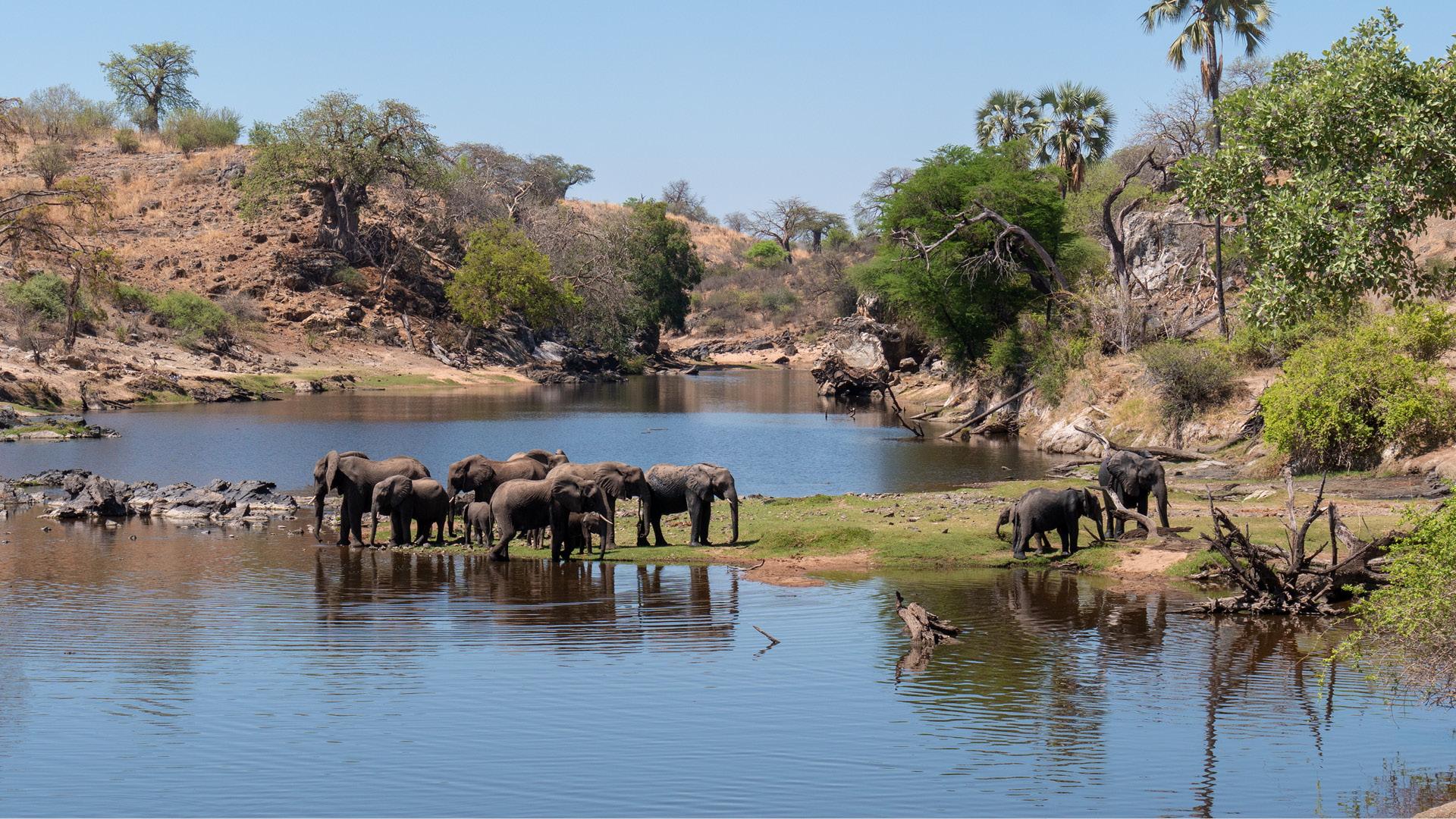 ruaha-national-park-tanzania