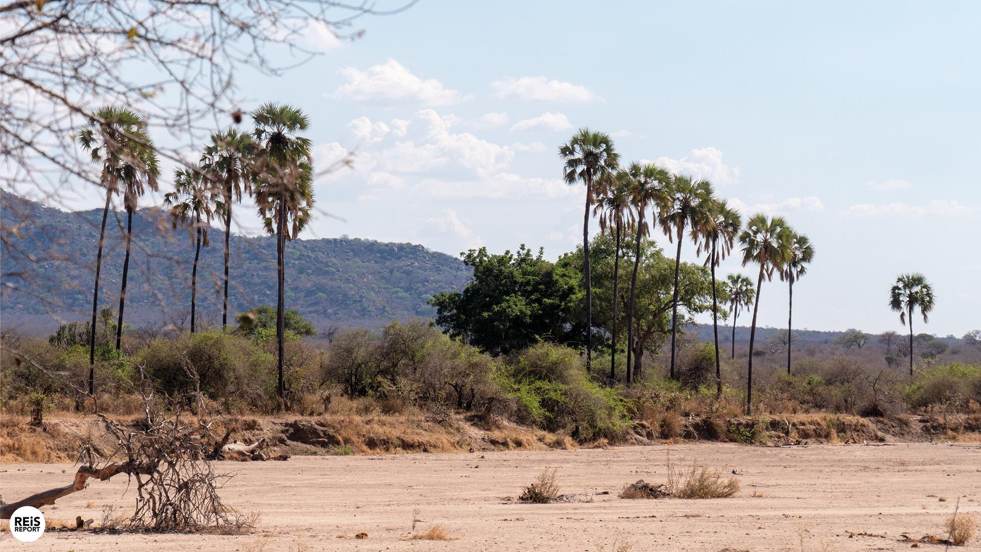 ruaha-national-park
