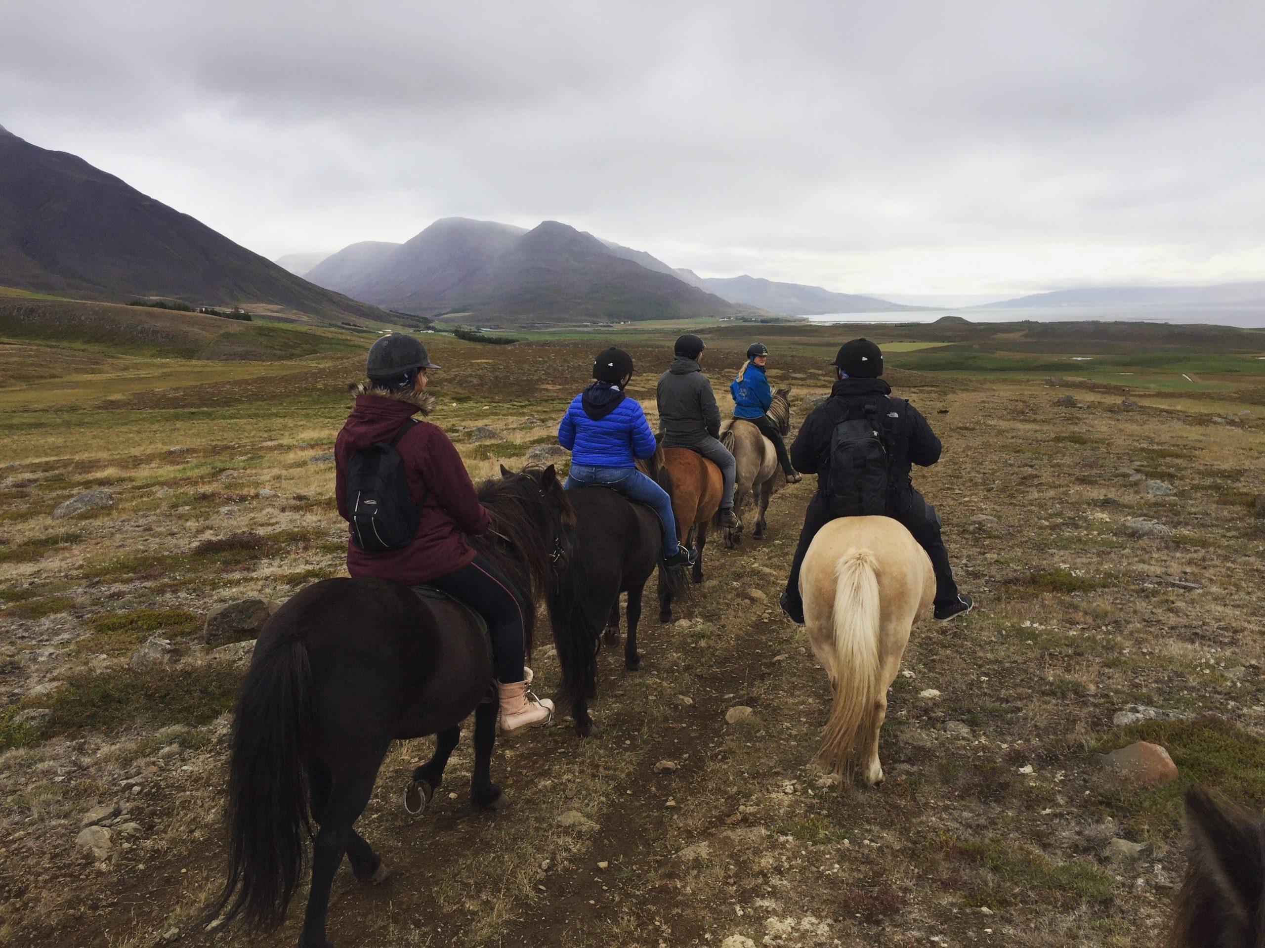 ijsland-per-paard
