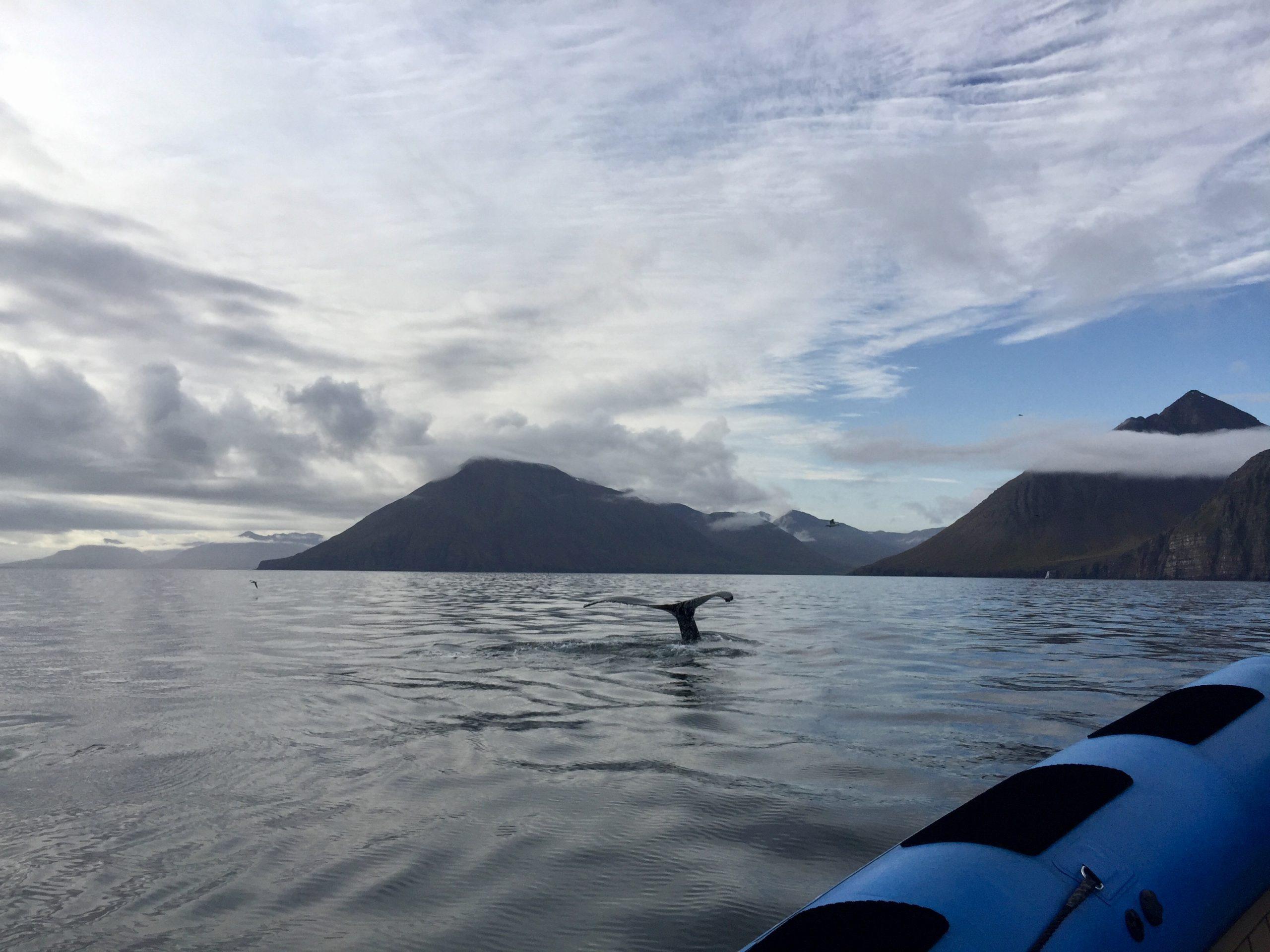 walvissen-ijsland