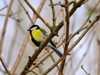 gratis-vogelcursussen