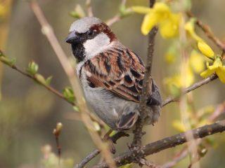 nationale-vogeltelling