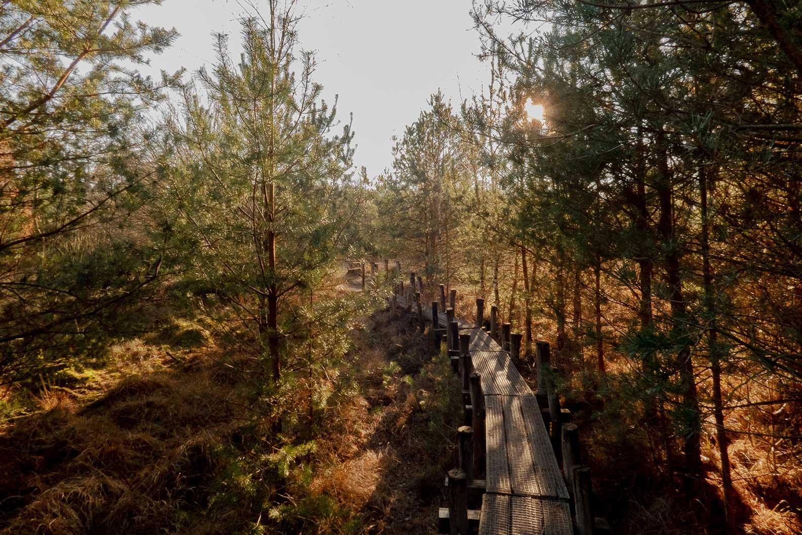 dwingelderveld-nationaal-park-spier-wandelen