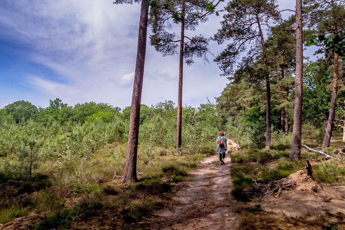 drenthe-hondsrug-wandeling