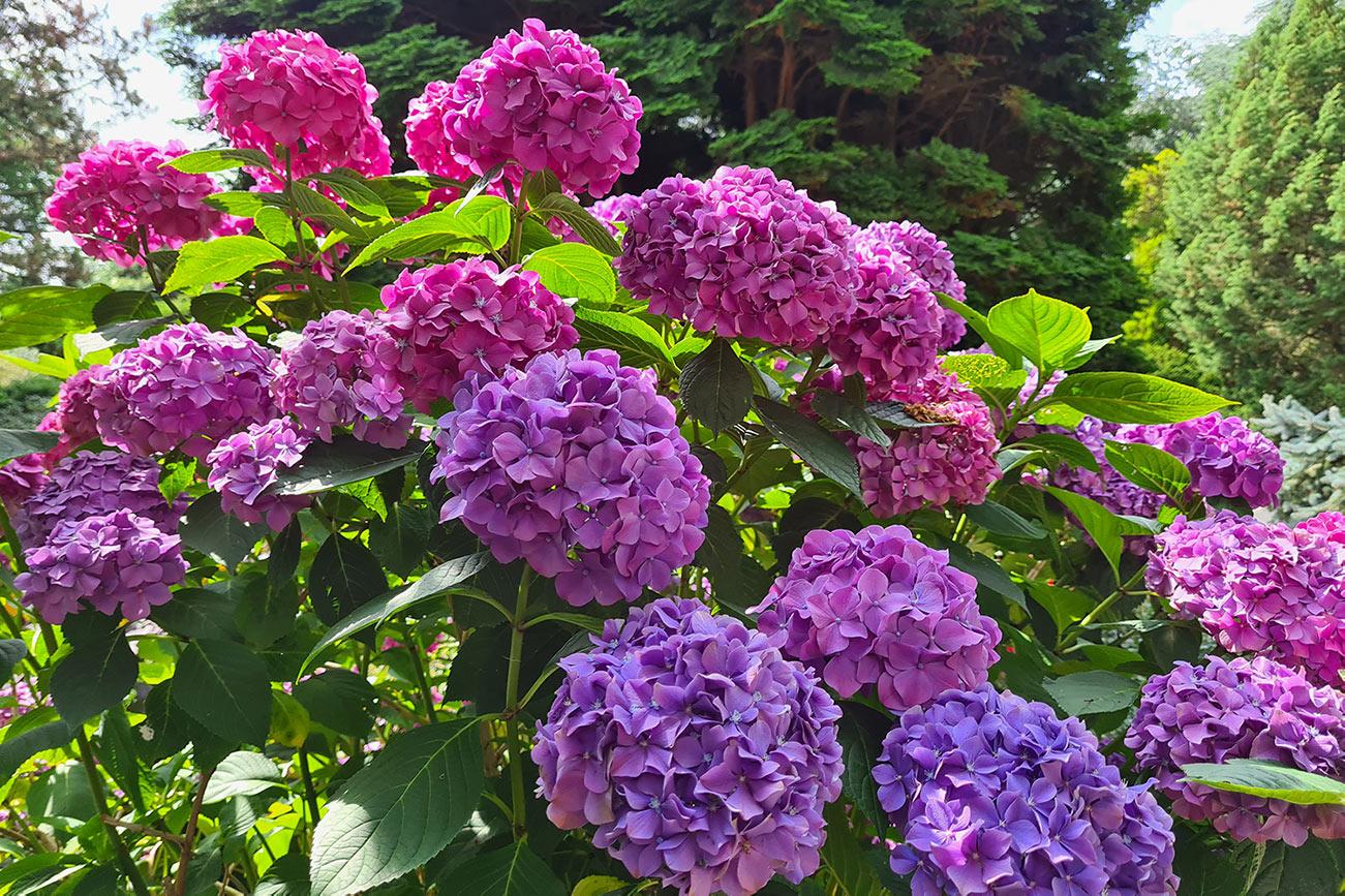 trompenburg-tuinen-arboretum-rotterdam