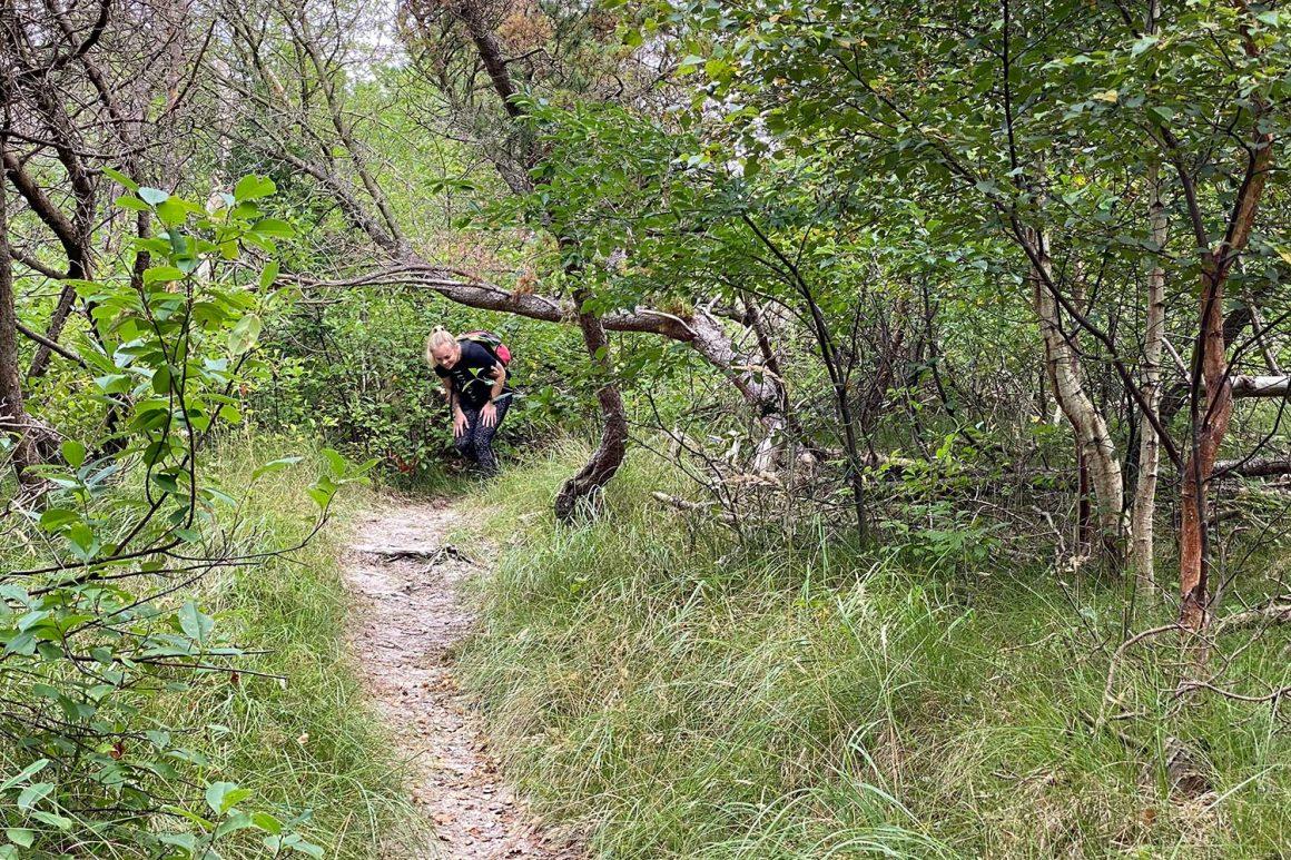 boswachterij-westerschouwen-route